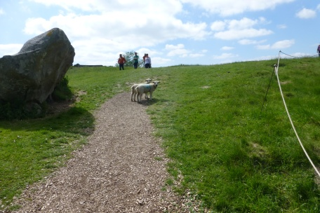 Sheep on the trail